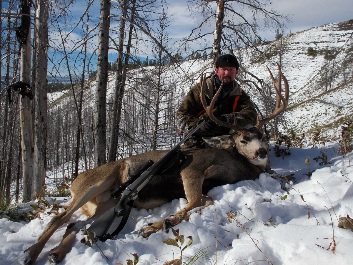 Late Season Mule Deer